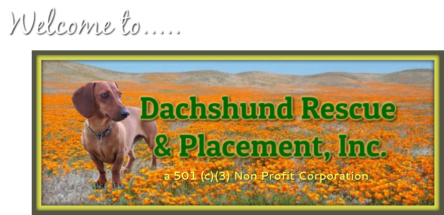 Dachshund Rescue and Placement, Inc. - So CA - Home